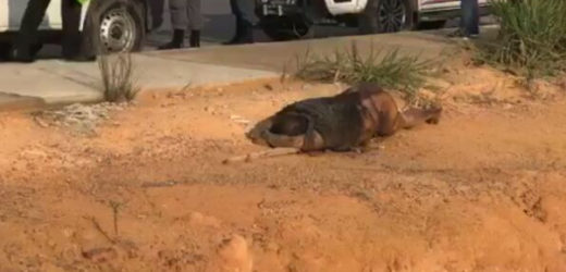 Corpo de homem é encontrado em estado de decomposição em Avenida de Manaus