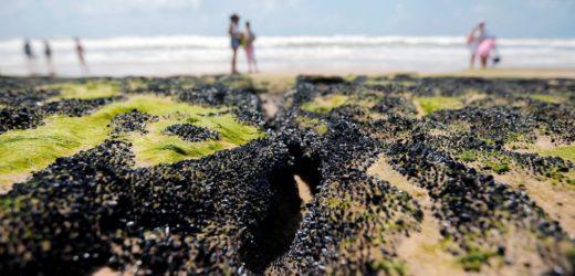 Governo libera R$ 130 milhões para seguro-defeso a pescadores do NE