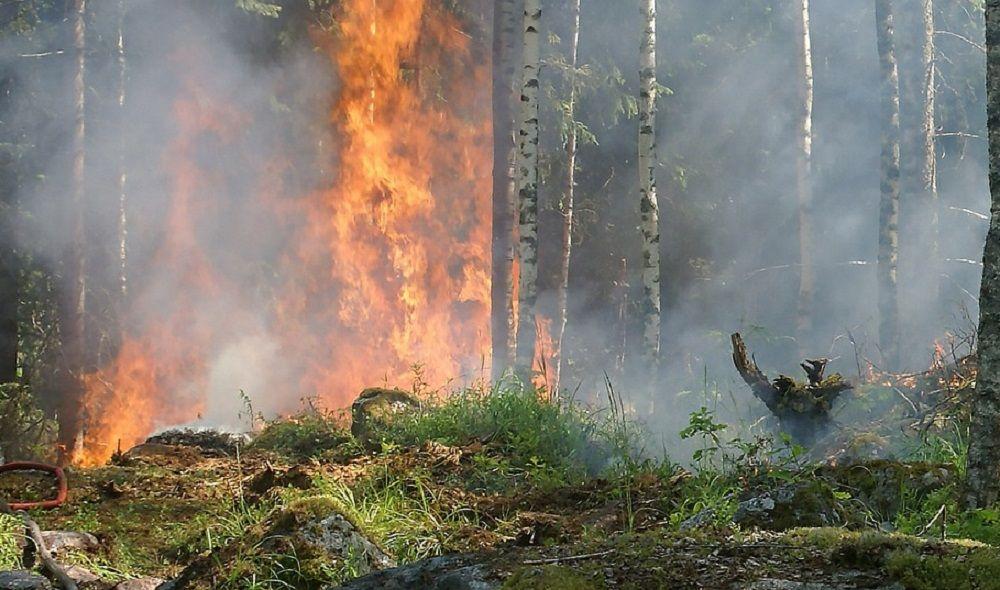 Incêndio em vegetação próximo ao João Lúcio preocupa pacientes