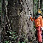 Governo estuda concessão de cinco áreas florestais no Amazona