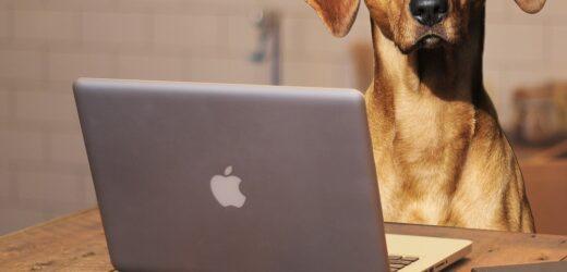 Compras e informações veterinárias online devem seguir em alta